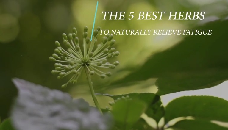 The 5 Best Herbs to Naturally Relieve Fatigue (Video)