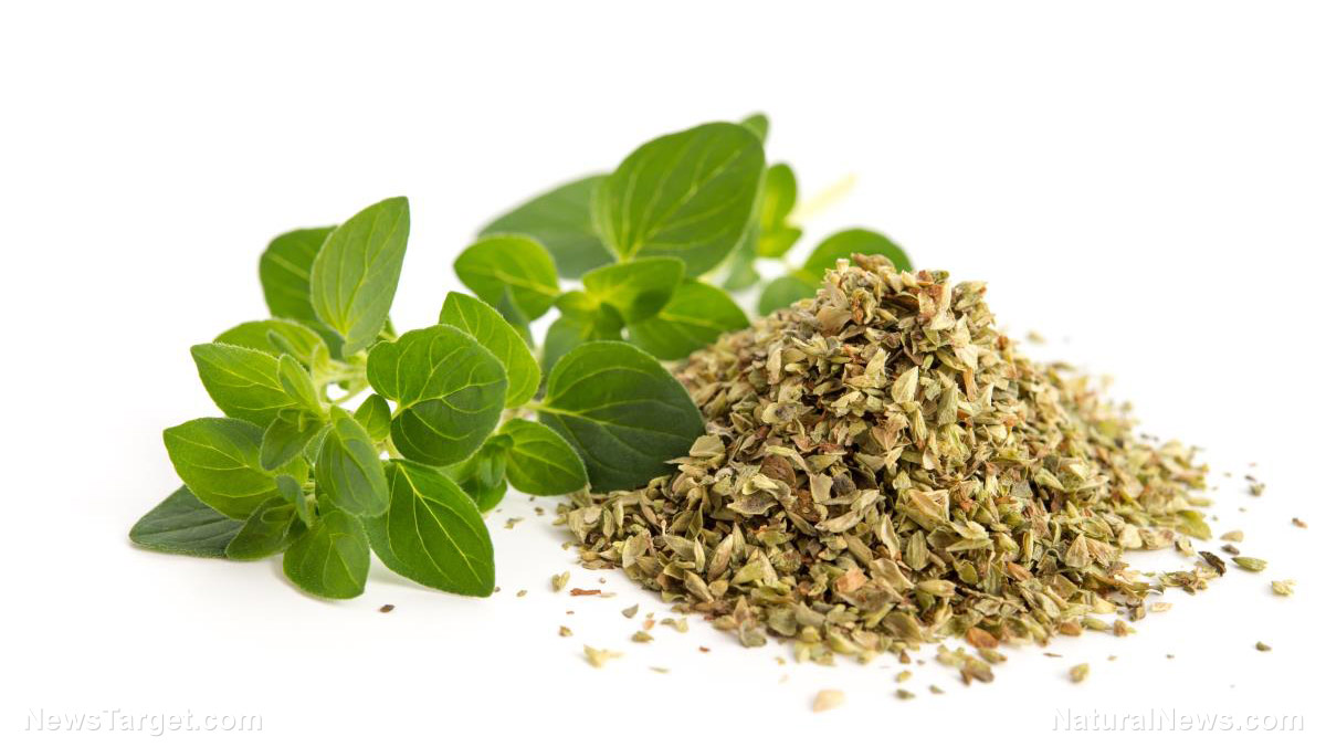 Keep these amazing herbs in your kitchen these plants can - Herbs that can be grown indoors ...